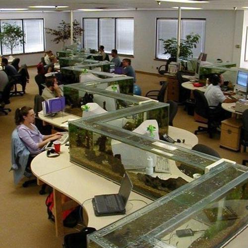 办公室鱼缸摆放风水