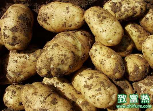 马铃薯主食产品达数百种