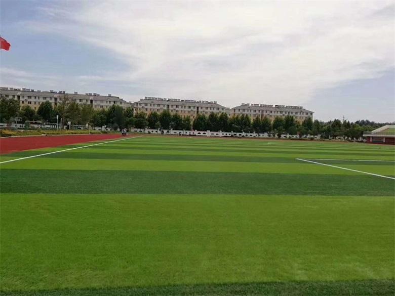 草坪.jpg