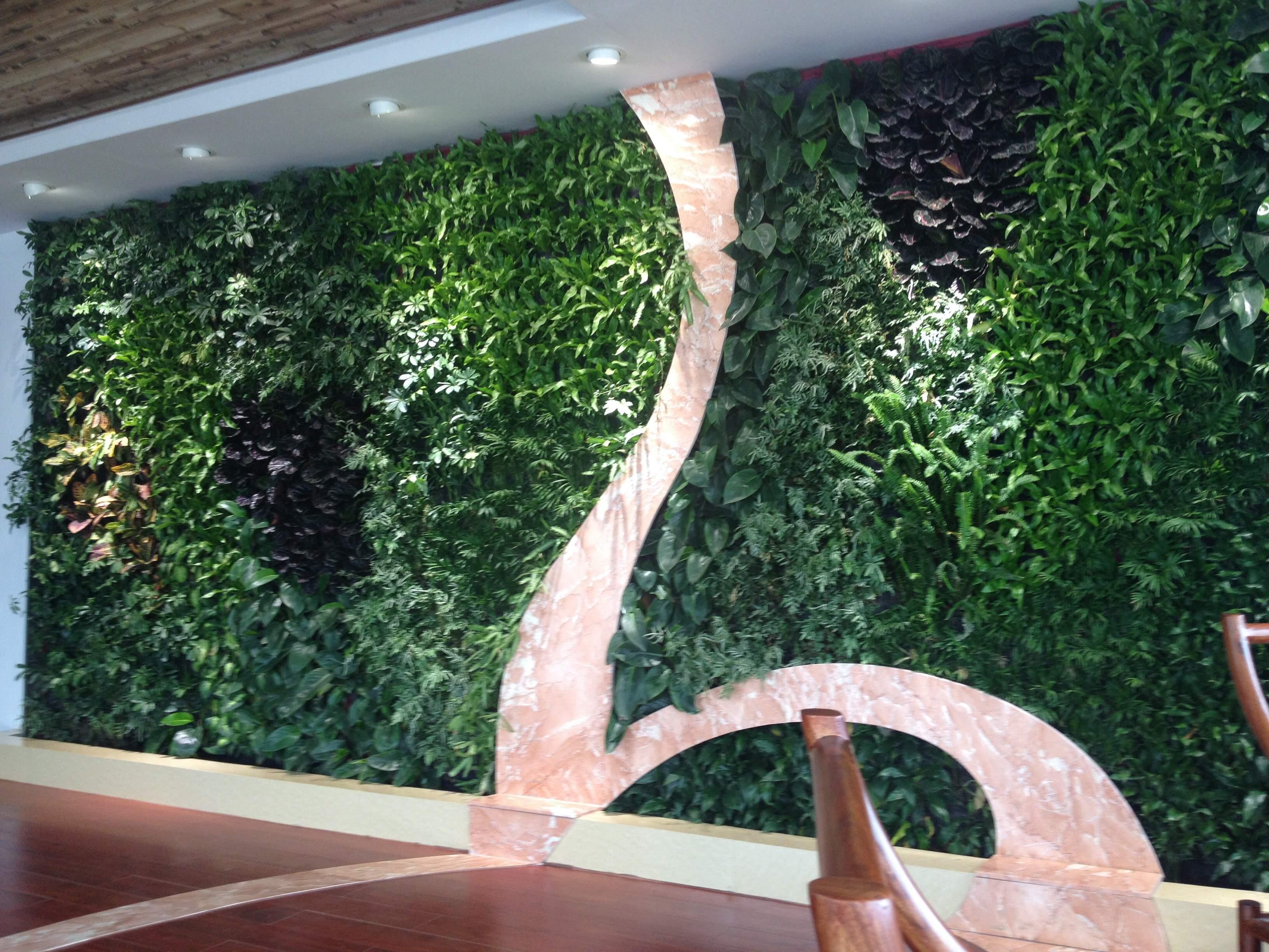 东莞办公室植物墙.JPG
