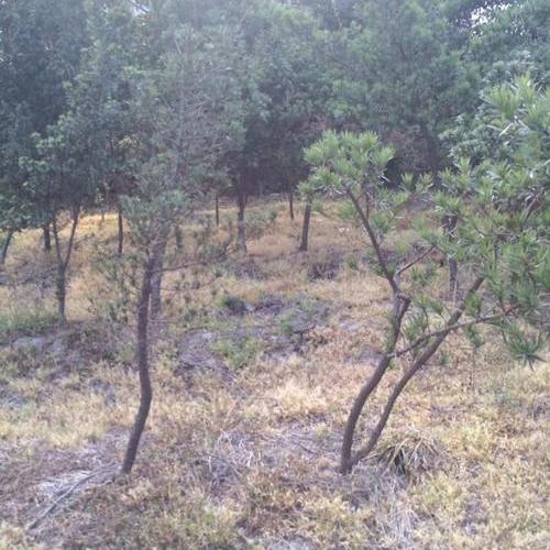 景觀苗木基地