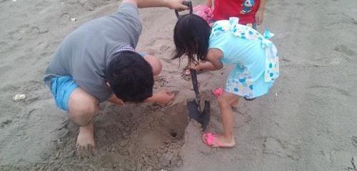 东楮岛海边游玩特色项目——挖沙蟹(免费)