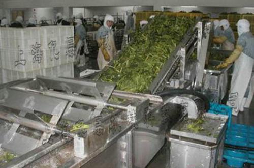 果蔬清洗提升机