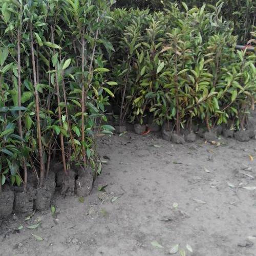 新凯发体育,凯发体育官网登录園林綠化工程