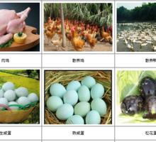 禽蛋及腌制品