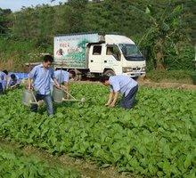 蔬菜、粮油、农副产品等配送服务