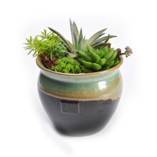 盆栽植物 敞口酒坛