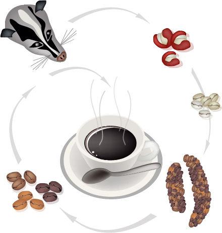 貓屎咖啡真值那么多錢?