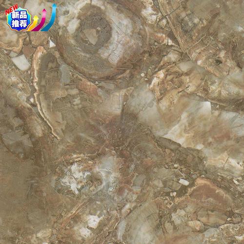LY-SC1639浅木化石_副本.jpg