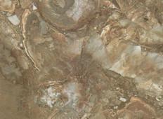 〖新品〗浅木化石