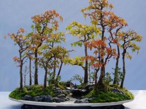 叢林盆景圖