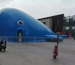 蓝色大鲸鱼.能亮瞎你双眼