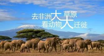 【境外游】感受火热的季节,看东非肯尼亚动物大迁徙,轻奢小团随时出发!