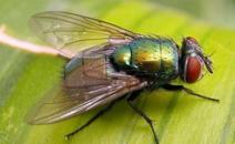 苍蝇和猎趣tv官方的危害