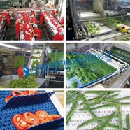 勝耀塑料網帶應用于水果和蔬菜行業