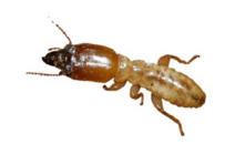 白蟻防治促銷