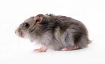 老鼠防治促銷