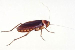 蟑螂防治促銷