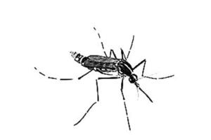 蚊子防治促銷