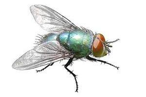 蒼蠅防治促銷