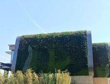 立體墻綠化