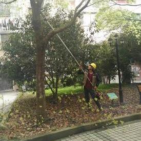 上海正翔绿化修剪队
