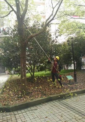上海正翔綠化修剪队