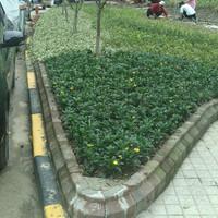 宝山区闻喜路251弄老小区绿化改造----绿化工程分包