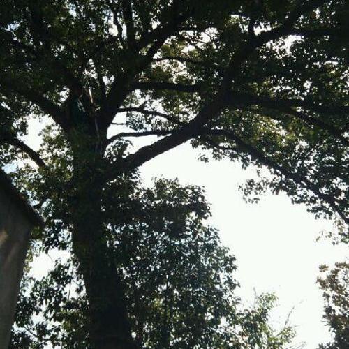上海青浦区商榻镇古树移植--------绿化工程清包