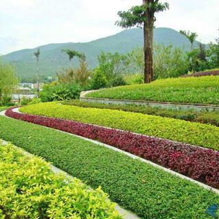 上海正翔绿化苗木供应中心