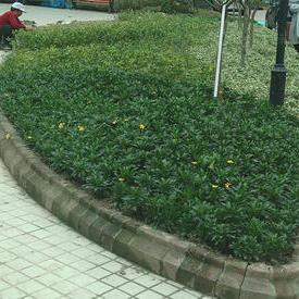 上海正翔绿化工程清包施工队
