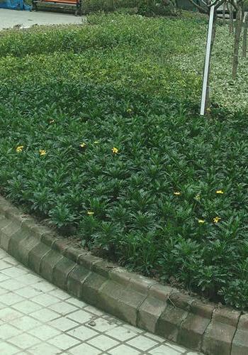 上海正翔綠化工程清包施工隊