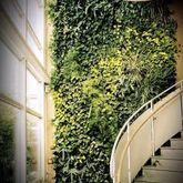 立體綠化墻