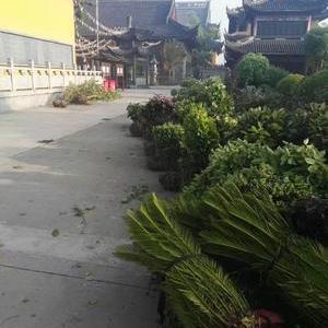 上海青浦区白鹤镇青龙寺绿化施工------綠化分包