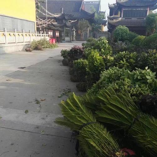 上海青浦区白鹤镇青龙寺绿化施工------绿化分包