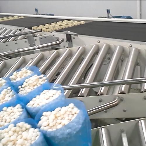 食用菌菇输送 金针菇输送线|金针菇传送带|金针菇生产线—上海世配自动化设备有限公司