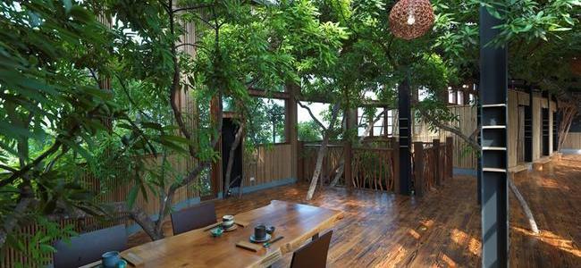 天光綠意+樹枝欄杆+竹子隔屏.jpg