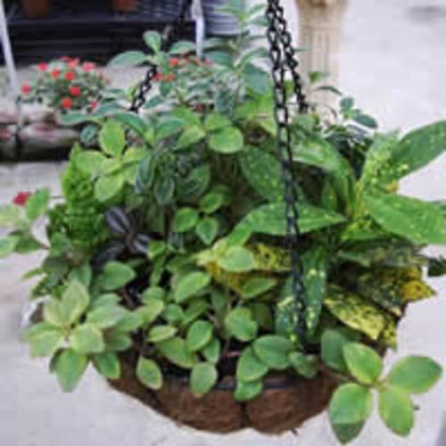 垂吊组合盆栽