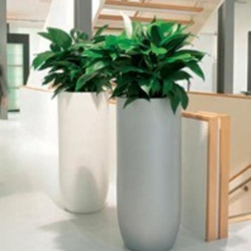 公司走廊植物