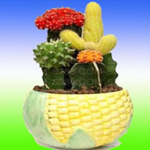 多肉体植物