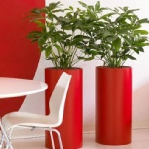 艺术区植物