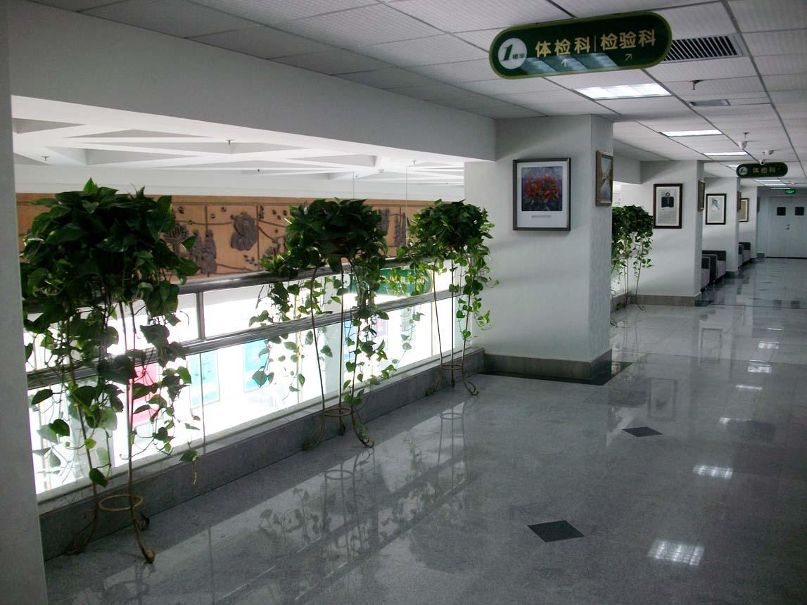 组合植物13.jpg
