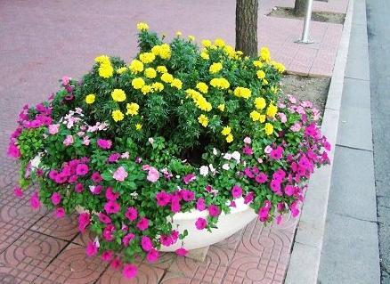 组合花卉.jpg