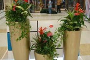 组合植物.jpg