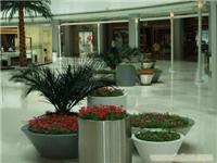 组合植物18.jpg