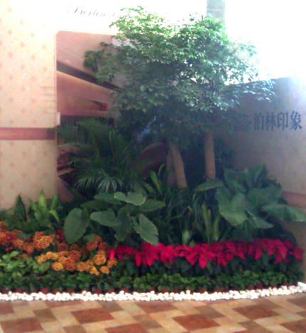 组合植物16.jpg