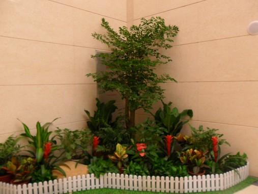 组合植物6.jpg