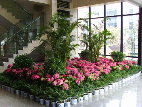 组合植物9.jpg