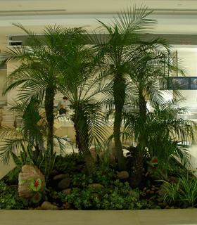 组合植物19.jpg