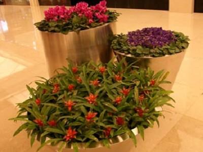 组合植物1.jpg